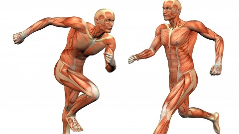 human-muscle-body-anatomy-musclemanrunning-1024x813.jpg
